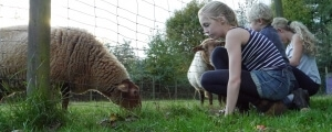 Kind beobachtet ein Schaf
